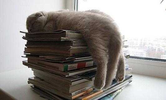 kitap-kedi-books-cats-5