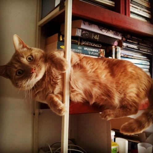 kitap-kedi-books-cats