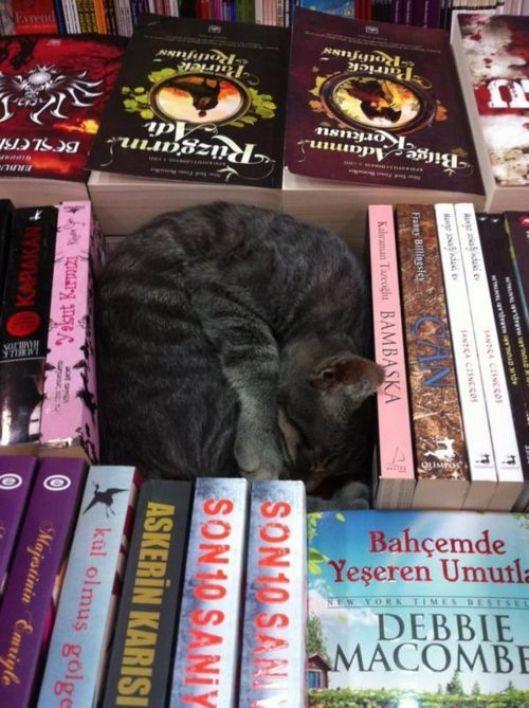 sleeping-cat-reading-book-uyuyan-kedi-kitap-okuyor-7