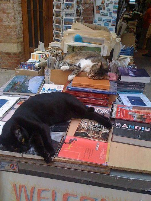 sleeping-cat-reading-book-uyuyan-kedi-kitap-okuyor-8