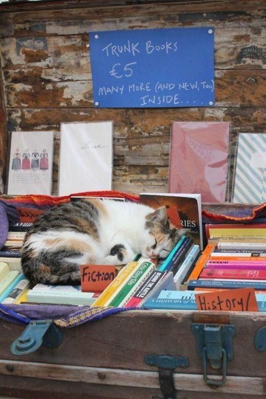 sleeping-cat-reading-book-uyuyan-kedi-kitap-okuyor-9
