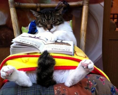 sleeping-cat-reading-book-uyuyan-kedi-kitap-okuyor