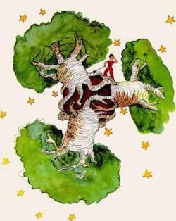 Baobab ağacı küçük prens