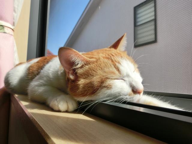 エアコンに頼らず、家を涼しくする方法 暑い家編