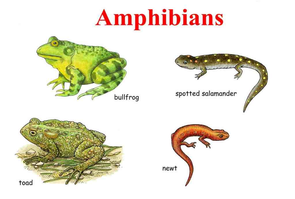 Learn English Vocabulary through Pictures: 100+ Animal Names 20