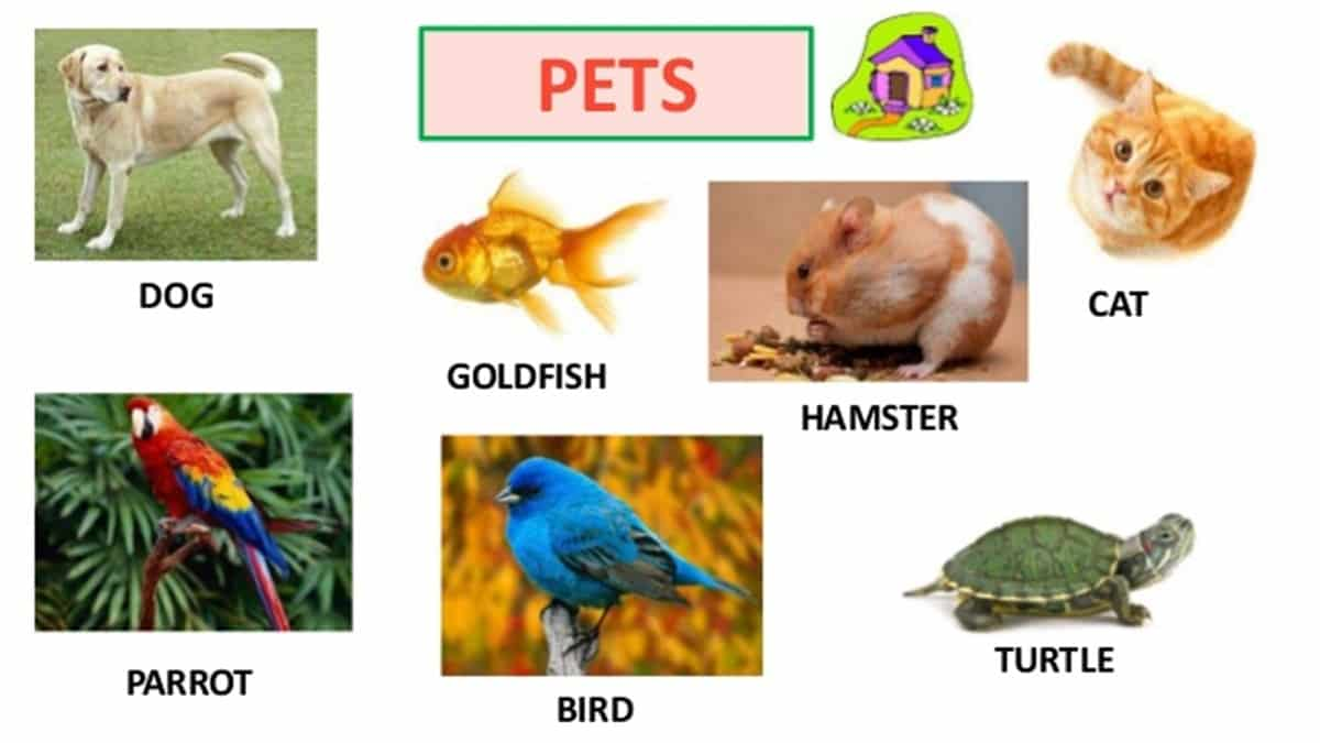 Visual Dictionary: Animals in English 18