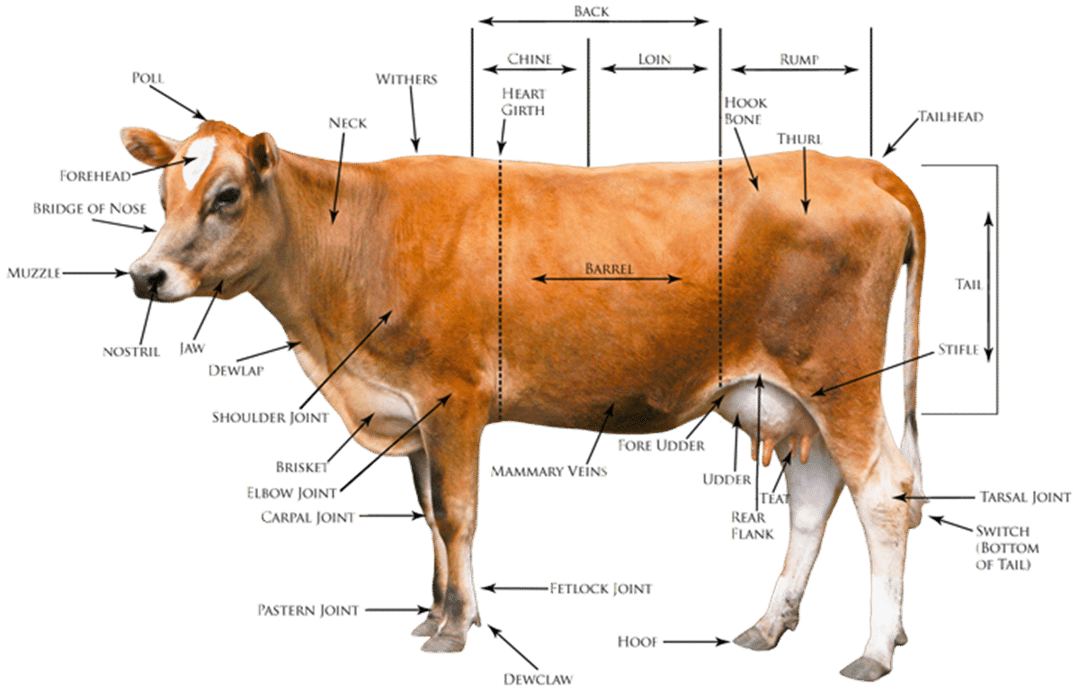 Animal Body Parts Vocabulary In English