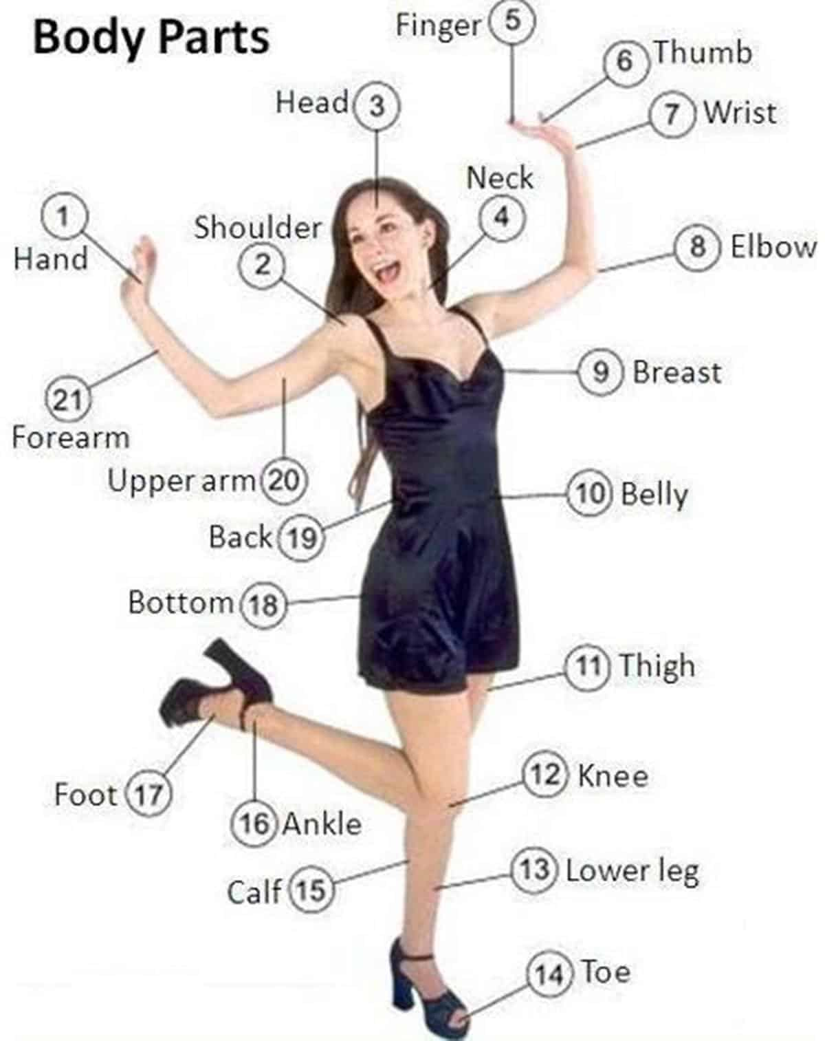 English Vocabulary Parts Of The Body