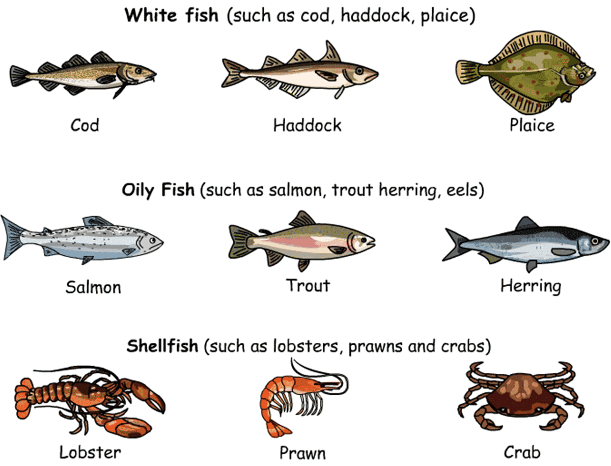 Meat poultry and seafood vocabulary esl buzz for Oily fish representative species