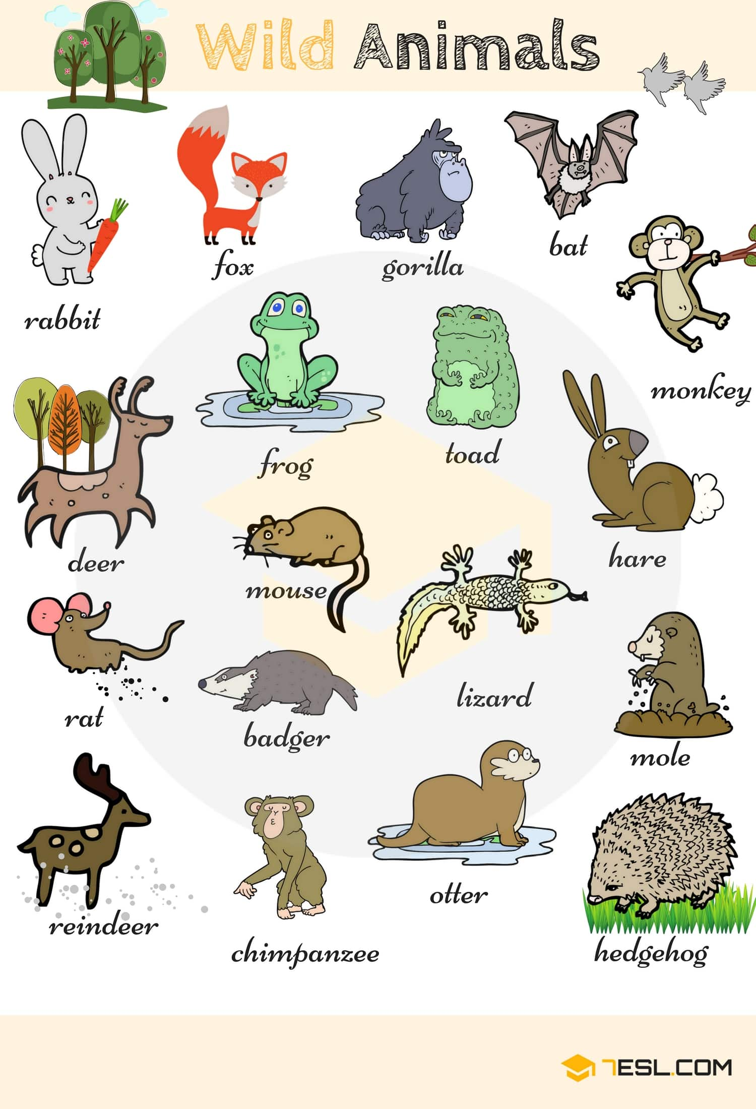 Wild Animal Vocabulary in English 14