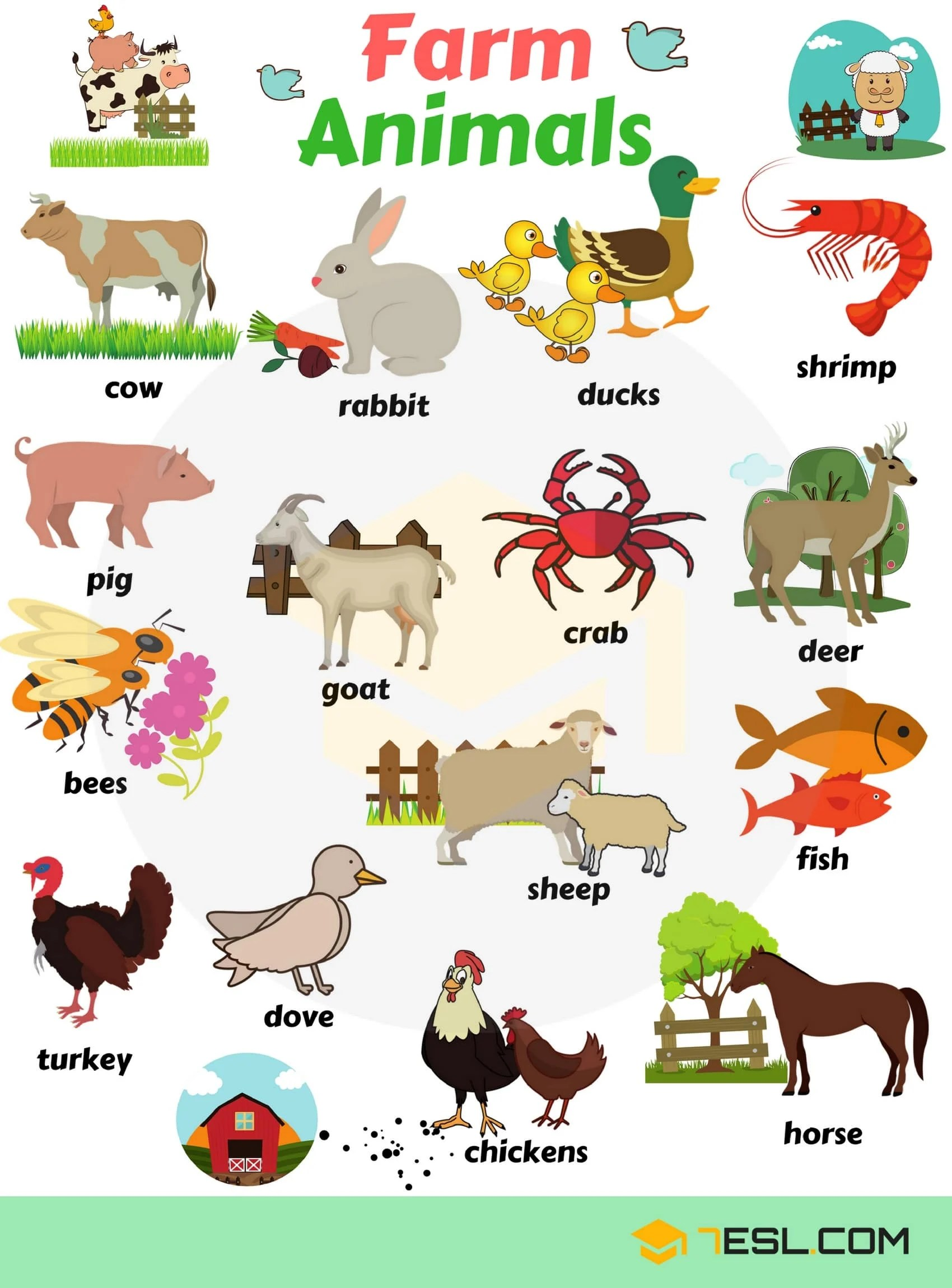 Farm Animals Vocabulary in English 12