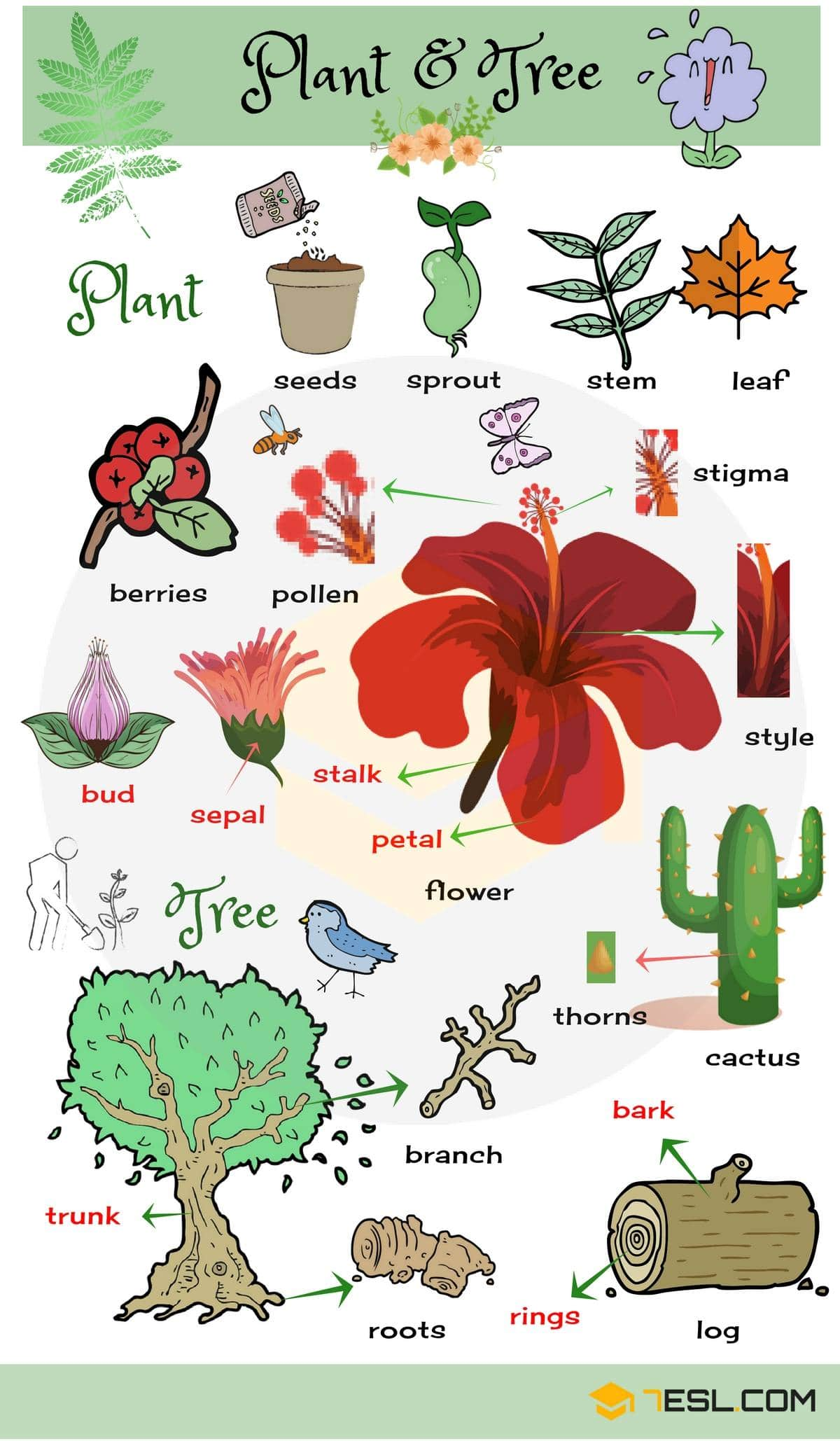 Plant And Flower Vocabulary In English