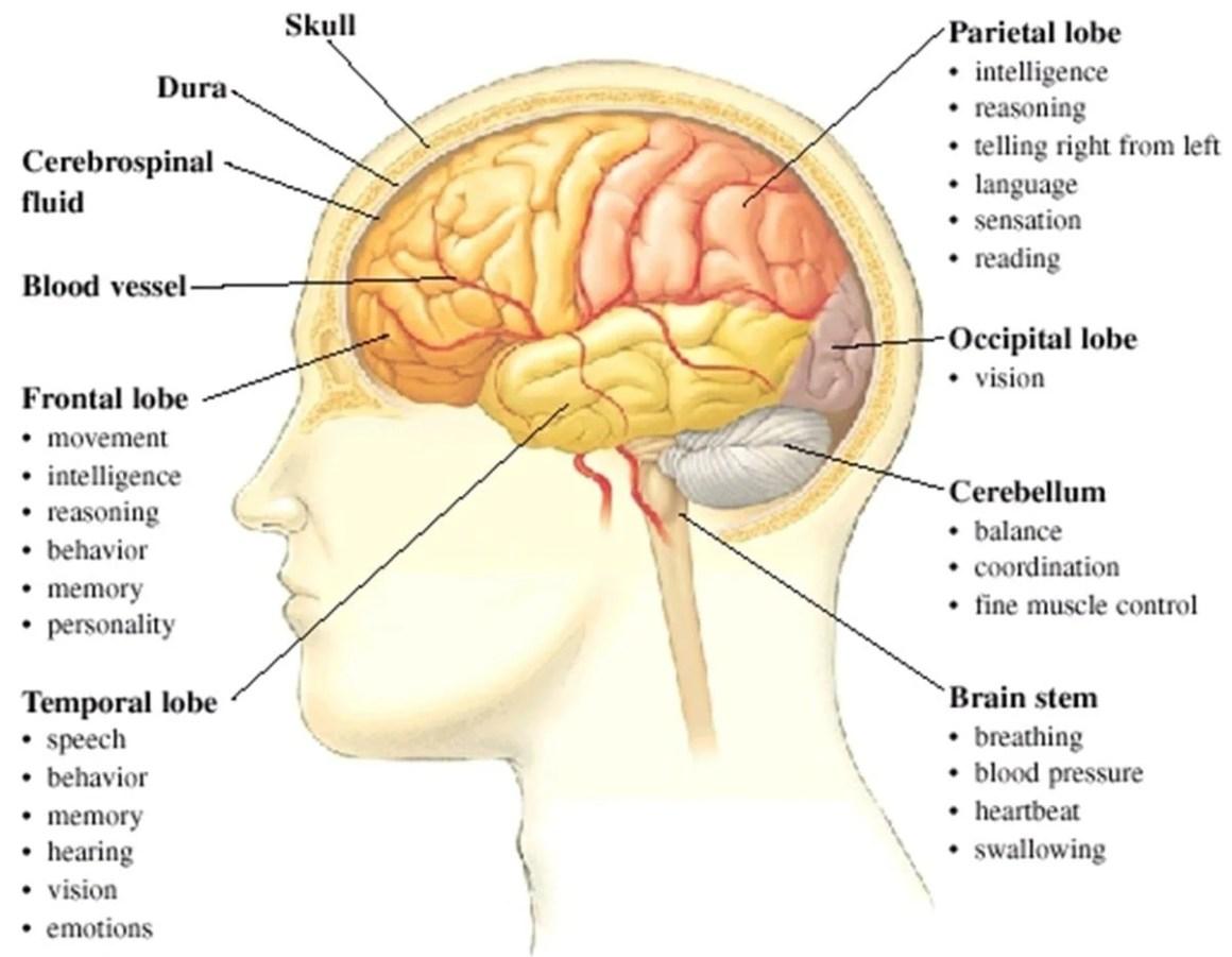 The Human Body Vocabulary Lets Explore The Human Body Esl Buzz