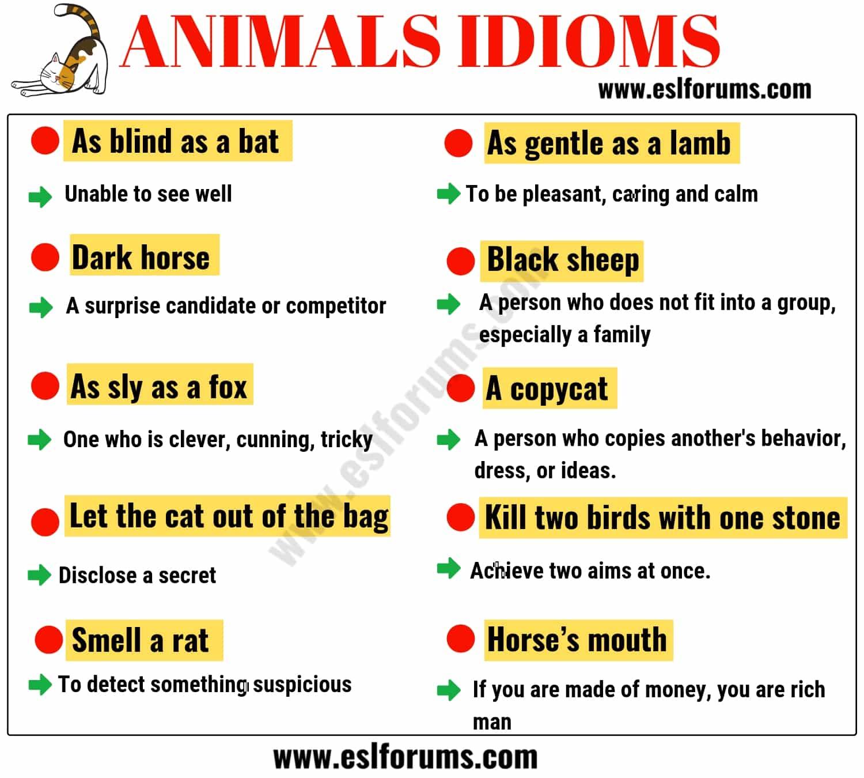 English Idioms Learn English Idioms With Topics