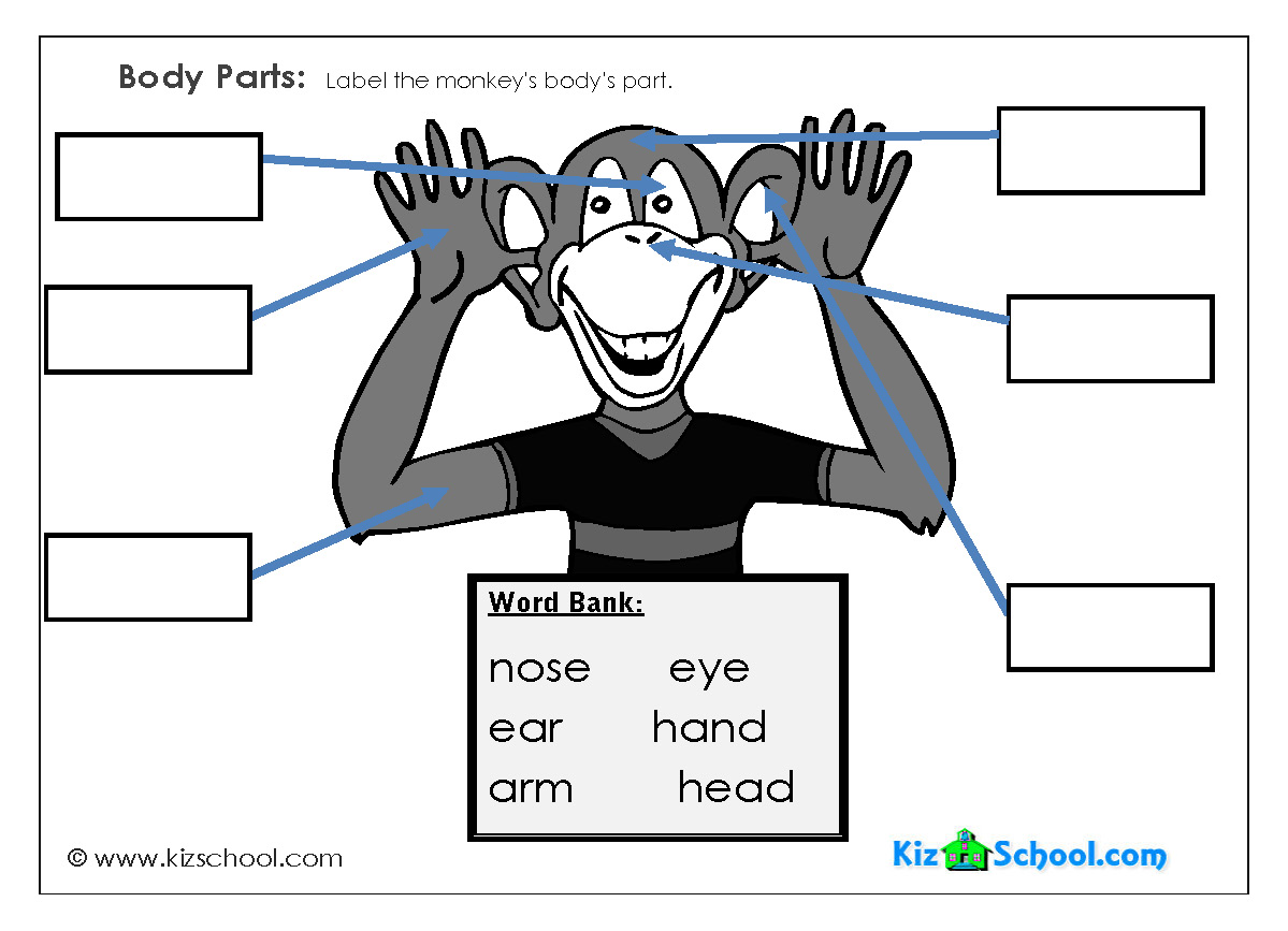 Label Body Parts Worksheet For Kindergarten