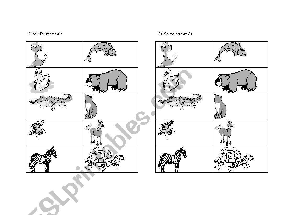 English Worksheets Mammals