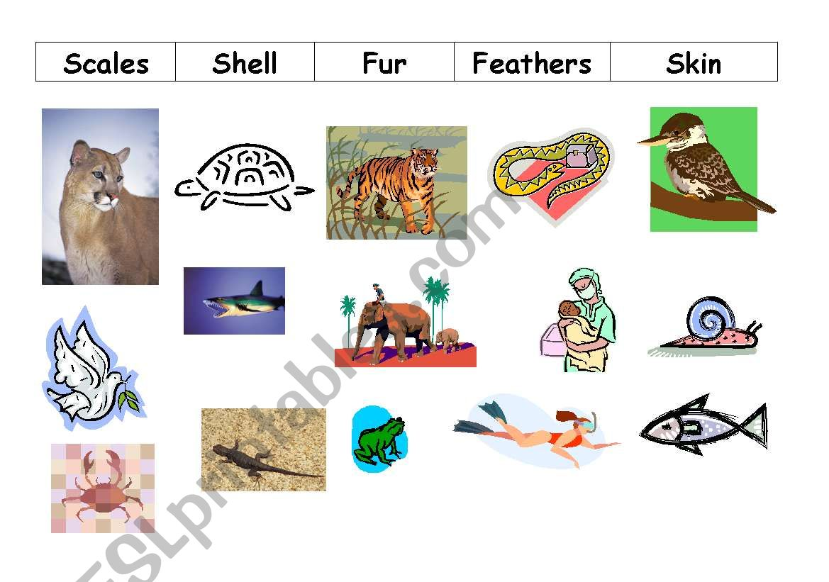English Worksheets Animal Coverings