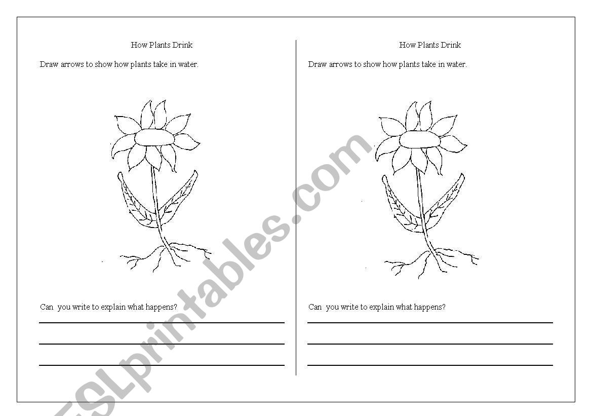 English Worksheets How Do Plants Drink