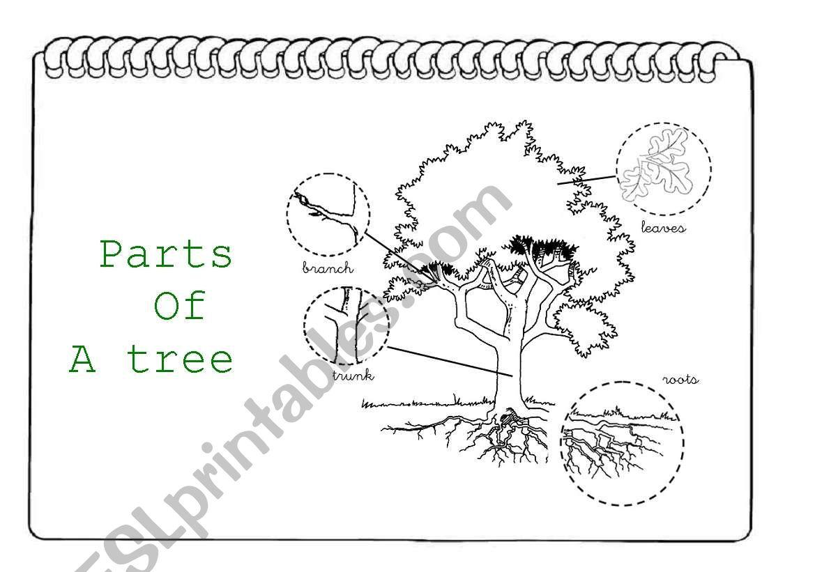 Parts Of A Tree I