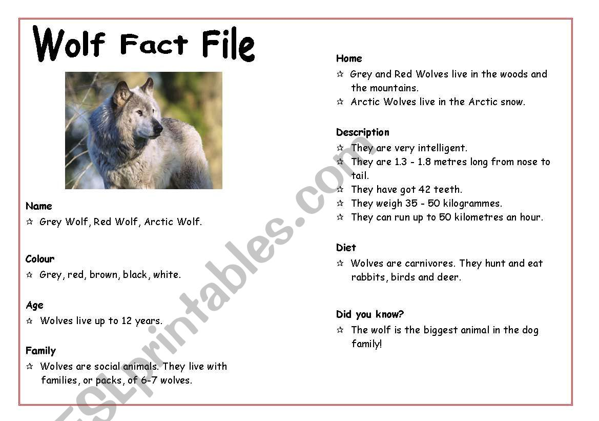Wolf Fact File