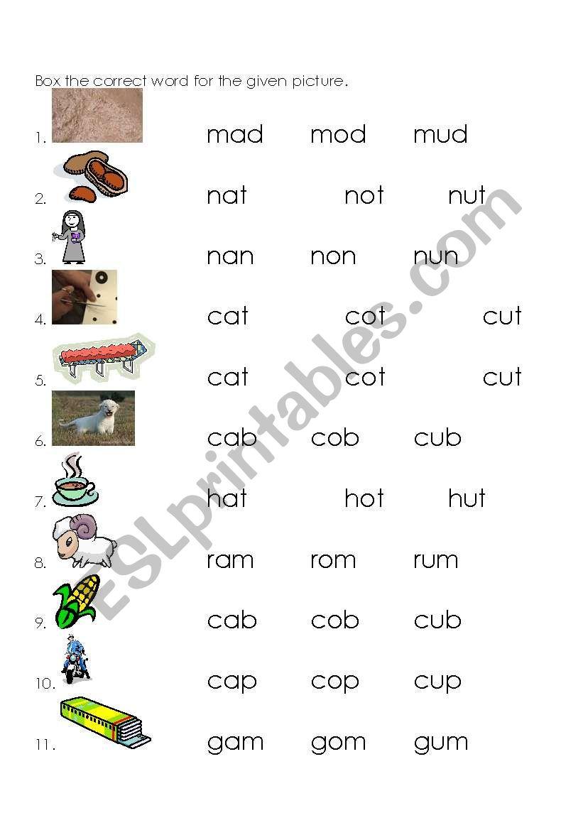 English Worksheets Homonyms