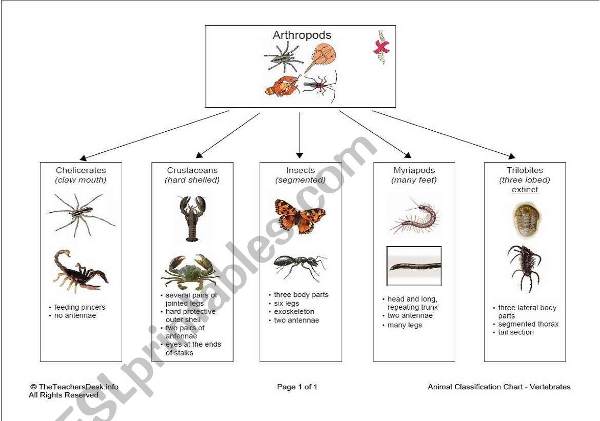 English Worksheets Arthropod Classification