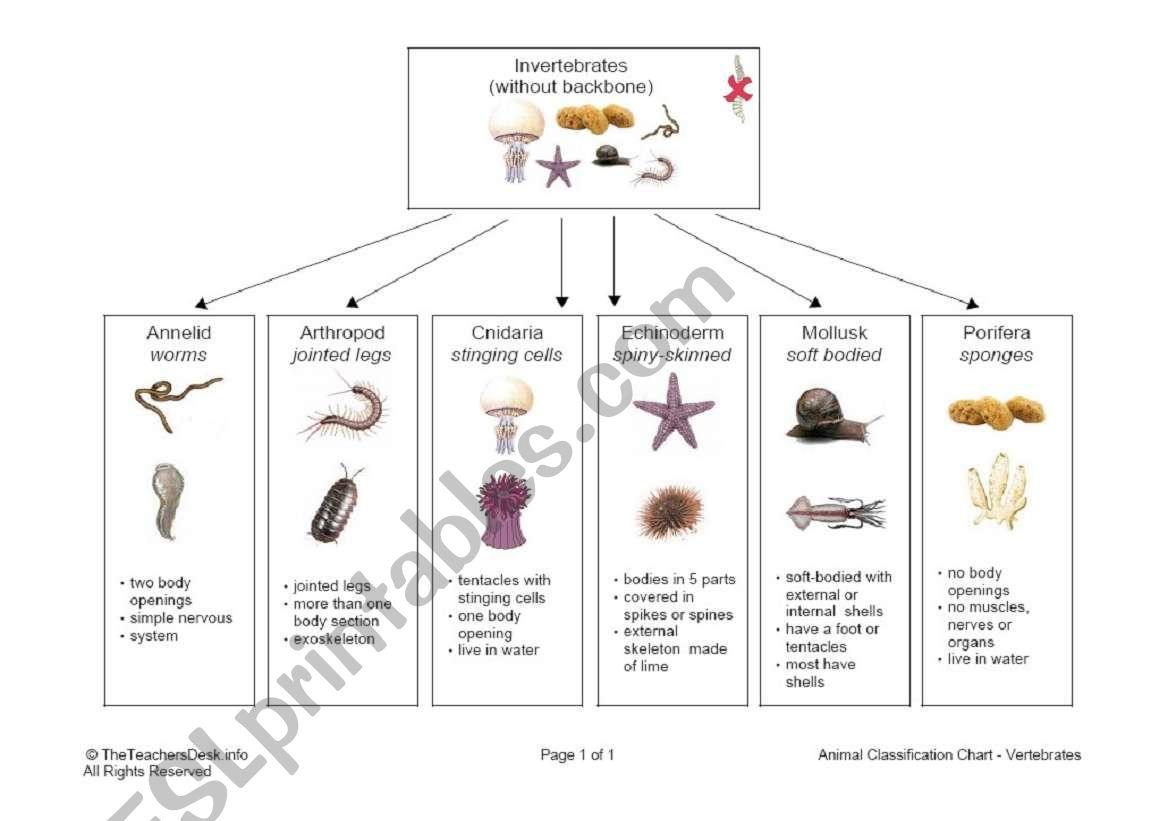 English Worksheets Invertebrate Classification Chart