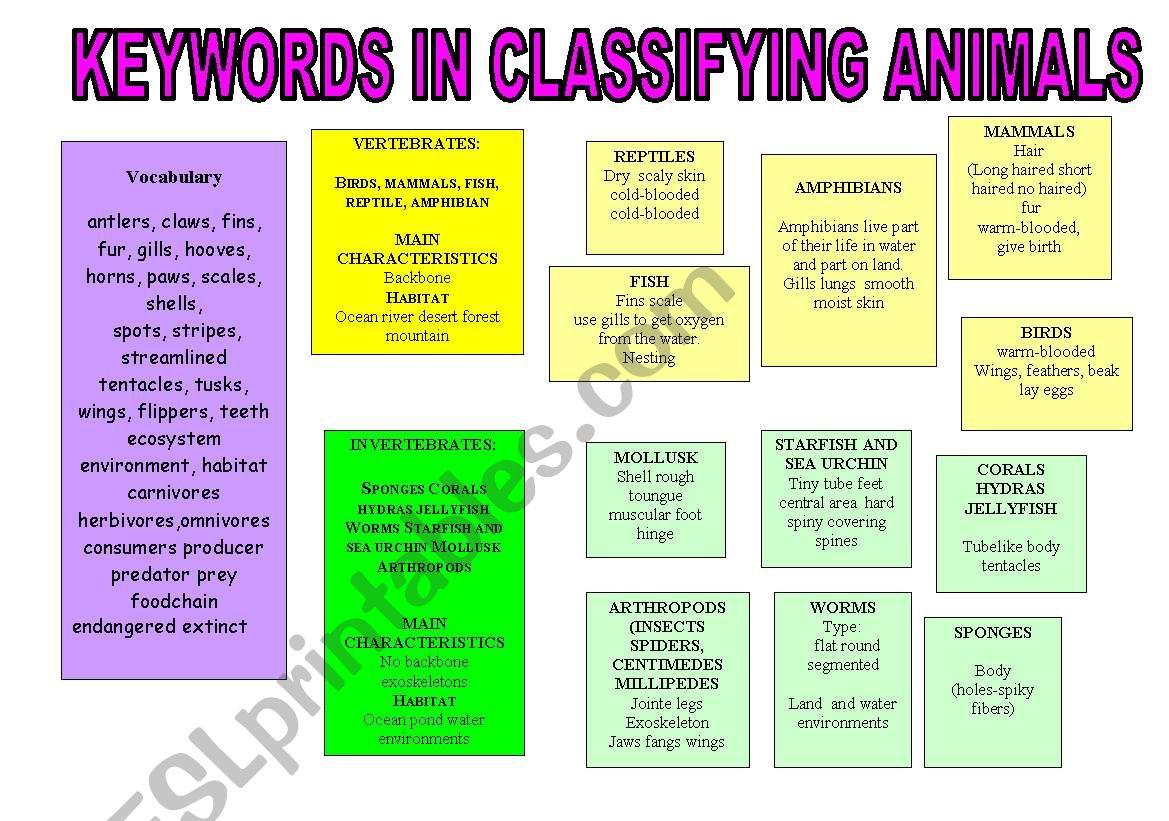 English Worksheets Keywords In Classifying Animals