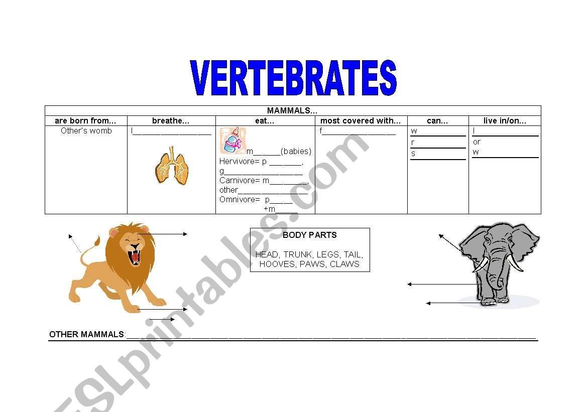 Vertebrates 1 Mammals