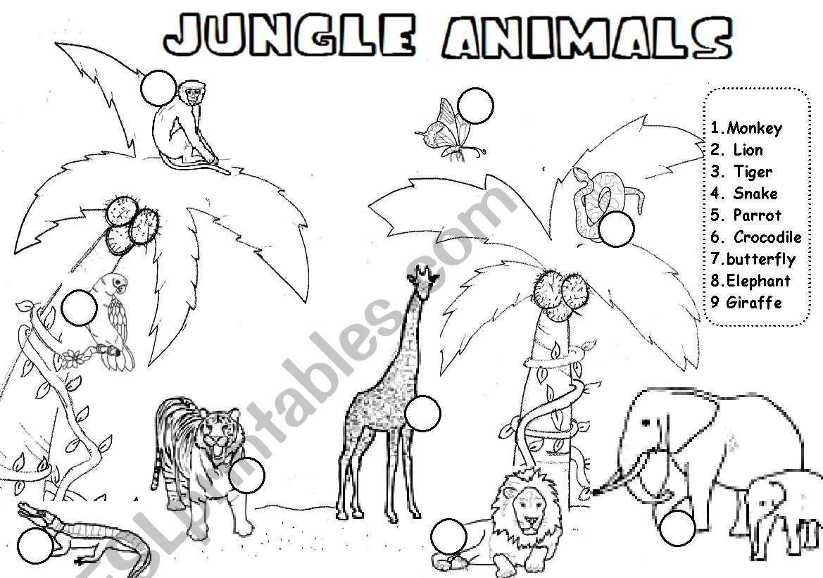 Jungle Animals Read And Number