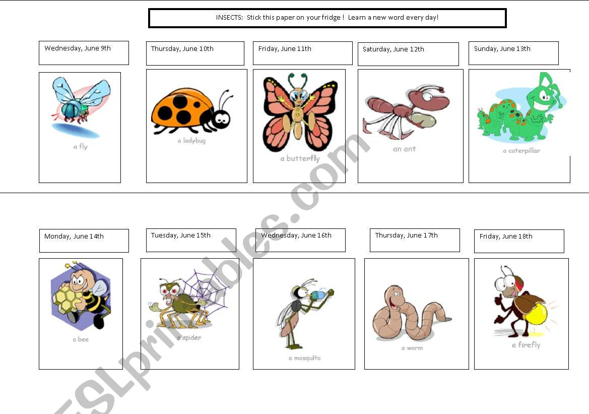 English Worksheets Insect Calendar