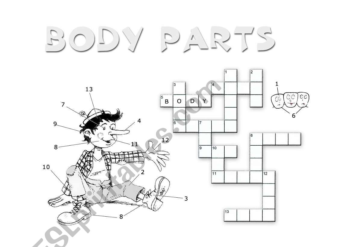 Body Parts Crossword