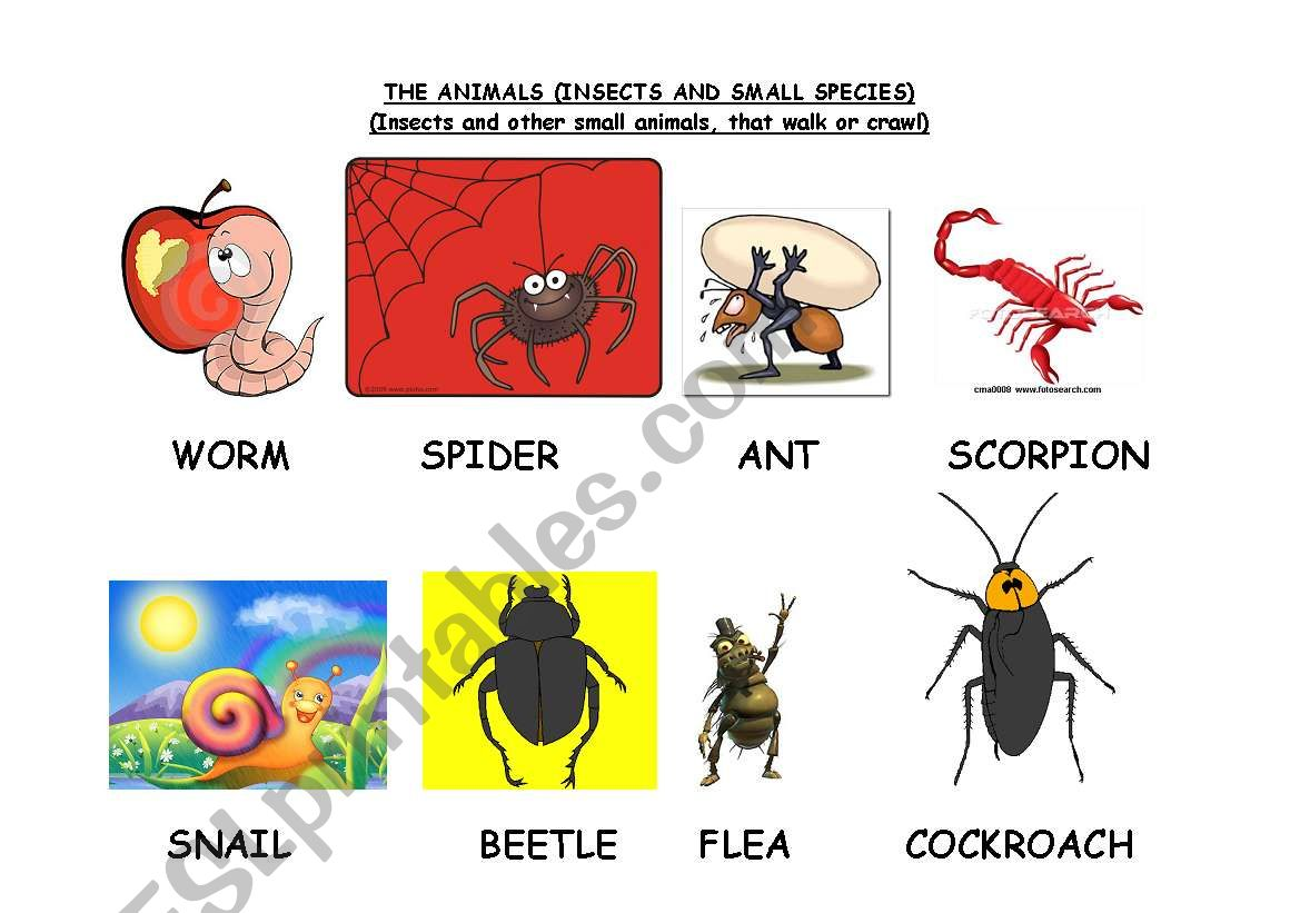 English Worksheets The Animals Insects And Small Species