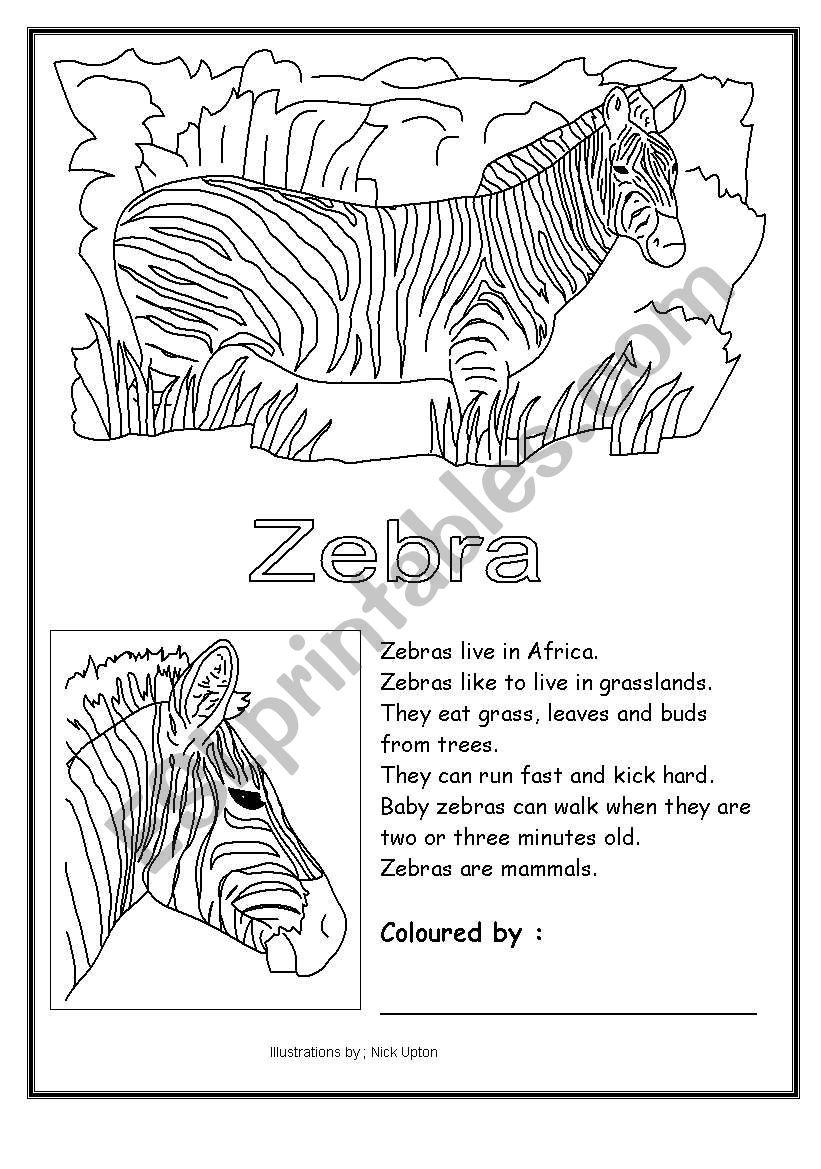 Zebra Coloring
