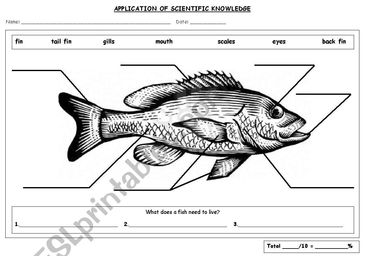 Fish Parts Labeling