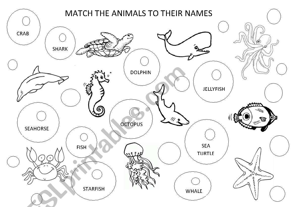 Ocean Animal Names