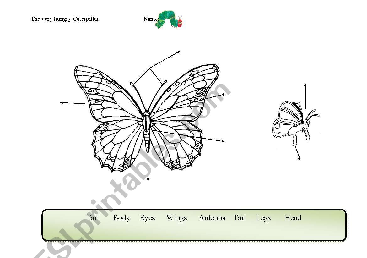 Butterfly Body Parts Worksheet