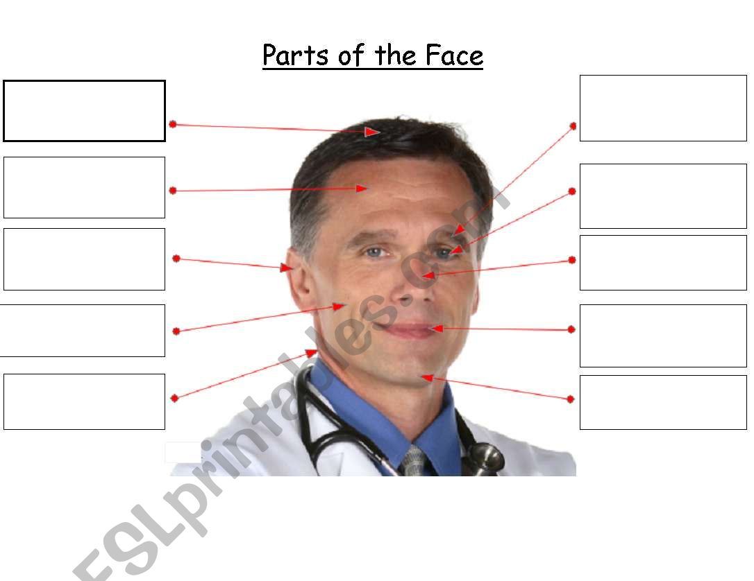 Label Parts Of The Face