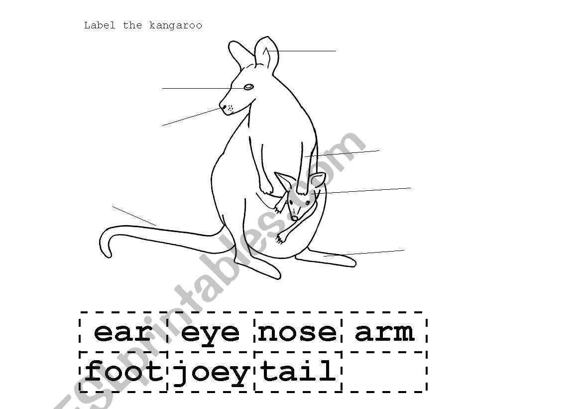 English Worksheets Kangaroo Label