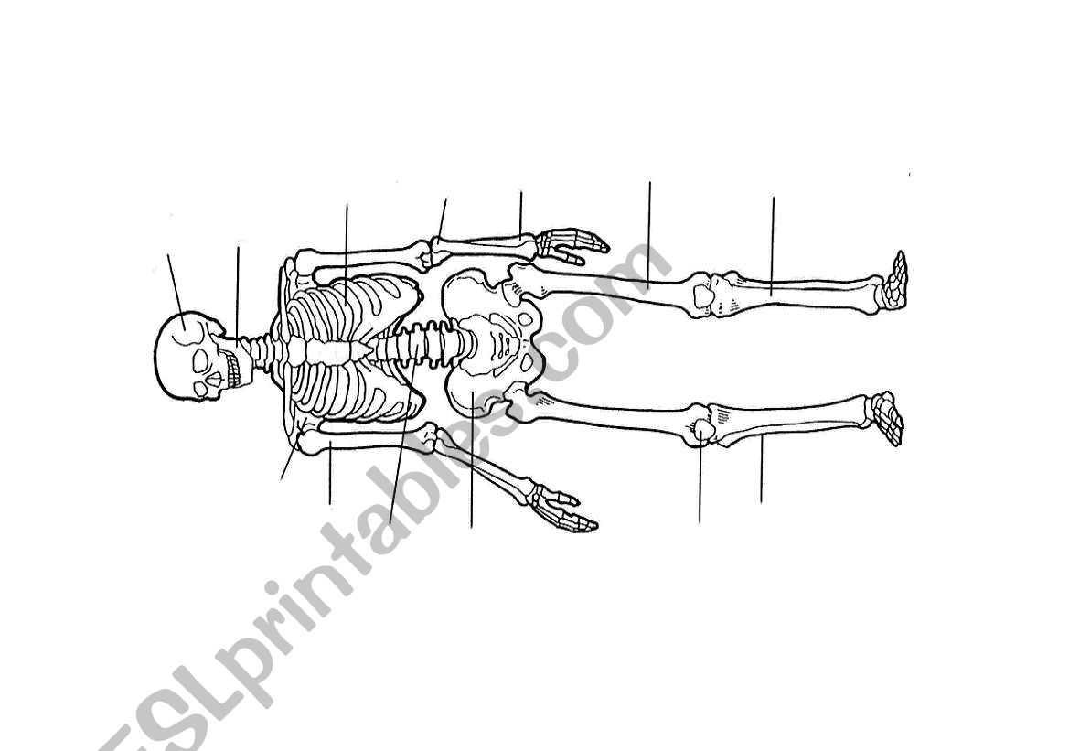 Bones Amp Muscles