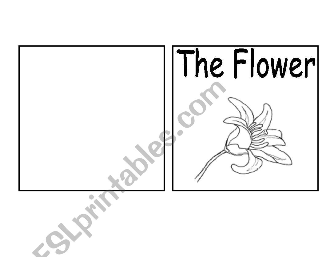 Parts Of A Flower Book