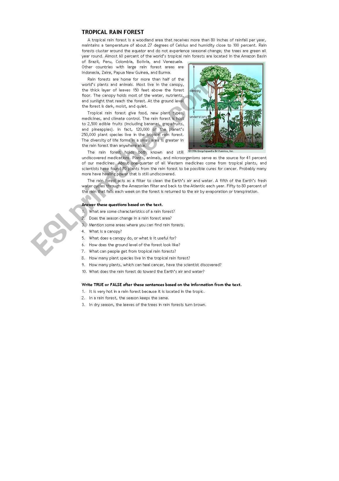 Elementary Rainforest Worksheets