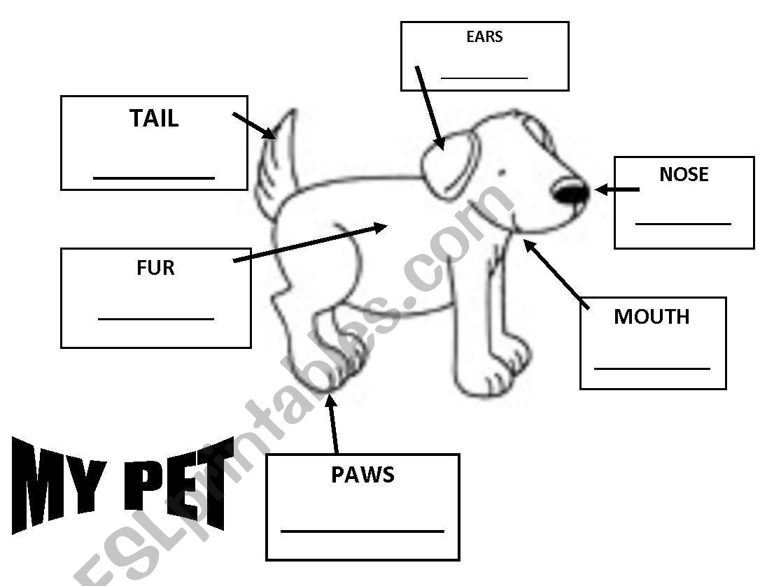 A Pet And It S Parts
