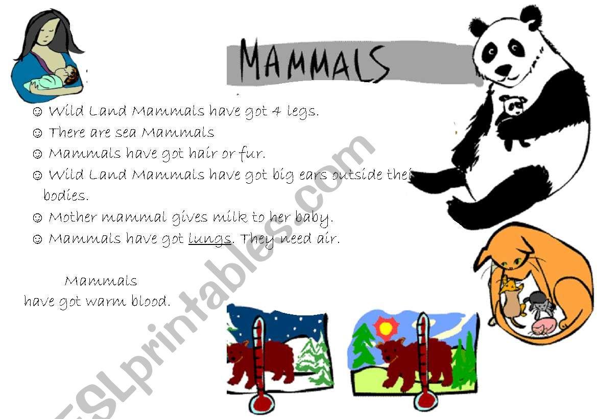 Vertebrates Mammal Reptiles Anphibians Birds