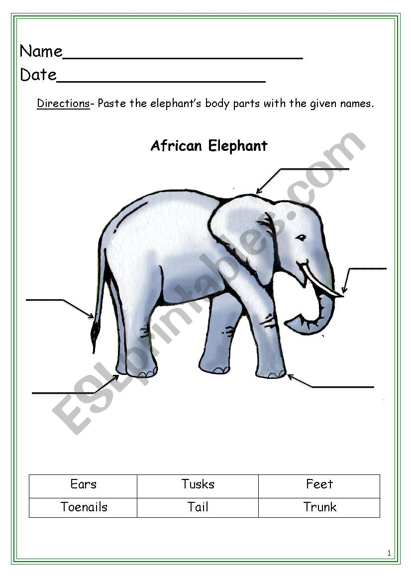 Elephant Labeling Worksheet