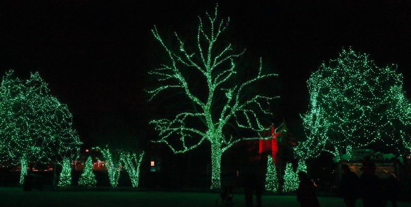 The Toledo Zoo is celebrating its 30th anniversary of Lights Before Christmas. BLADE PHOTO