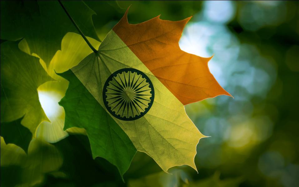 Canada-India leaf