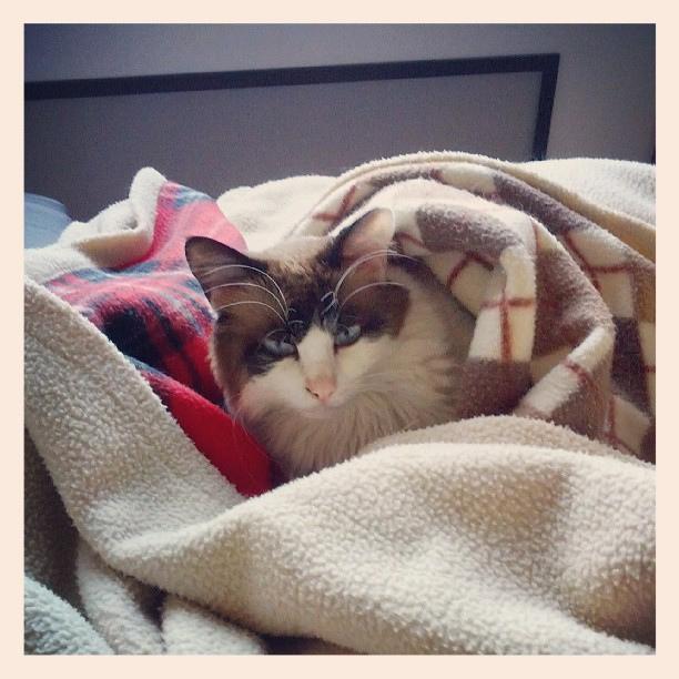 Gato friorento