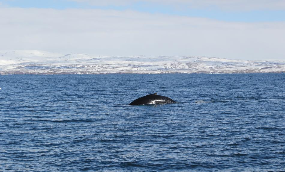 Voyage en Islande ➳ Partie 5