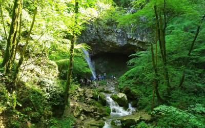 I benefici della Terapia Forestale